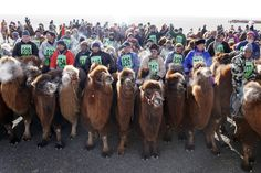 Camels breathe in cold weather during 'Temeenii bayar', the Camel Festival, in Dalanzadgad, Umnugobi aimag, Mongolia, March 7, 2016. On the steppes of the Gobi Desert, the crowd urges on Bactrian camels laden down with all that's needed to build and live in a traditional Mongolian tent. Guinness World Records classes the 15 km race thatÃs part of the two-day festival as the largest camel race in the world, drawing 1,108 participants. The winning camel romped home in 35 mi...