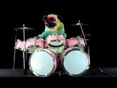 mi perro tocando la bateria
