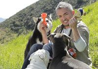 6 Great Ways to Challenge Your Dog's Mind | Cesar Millan