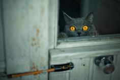"""""""It always gives me a shiver when I see a cat seeing what I can't see."""" --Eleanor Farjeon"""