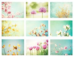 Pastel Photo Set - 9 Photographs - nine flower photography spring floral branch print set pale mint green blue yellow pink nature wall art
