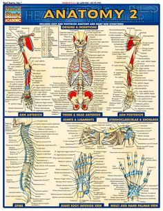 Human Anatomy A
