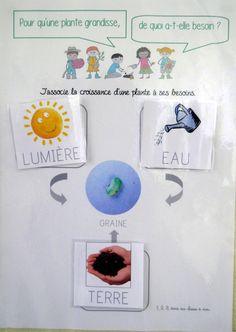 Projet tous au jardin Pre K Activities, Montessori Activities, Grade 3 Science, Grande Section, Kindergarten Lesson Plans, French Language Learning, Spring Theme, Plantation, Science For Kids