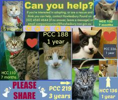 All these females are in desperate need of rescue or adoption, if you're interested or think you can help, then please contact Hawkesbury Pound. Their details are on this collage.