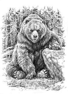 Сообщество иллюстраторов | Иллюстрация Хозяин. Animal Sketches, Animal Drawings, Grizzly Bear Tattoos, Grizzly Bear Drawing, Realistic Tattoo Sleeve, Pirate Ship Tattoos, Bear Sketch, Bear Pictures, Bear Art