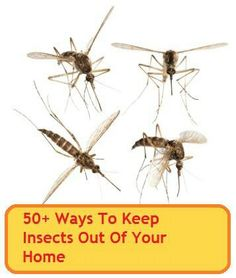 Not a fan of insects or creepy crawlies? Here are 50+ ways to keep mosquitoes, ants, dust mites, cockroaches, fleas, bed bugs, flies, wasps, moths, earwigs, silverfish and more out of your home -NATURALLY!