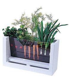 Watch your veggies grow! Great way to teach children how veg grows.