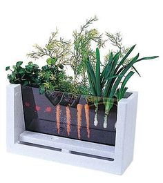 Watch your veggies grow! Great way to teach children how veg grows.
