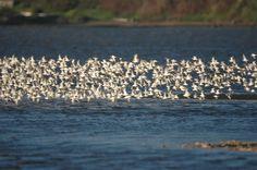 Birds in Bodega Bay