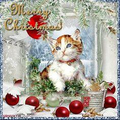 Kitten's Pretty Shiny Christmas Toy