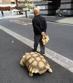 20+ Pics That Will Make You LOL Sulcata Tortoise, Giant Tortoise, Tortoise Turtle, Animals And Pets, Baby Animals, Funny Animals, Cute Animals, Pet Turtle, Turtle Love