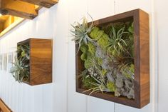 Urban Spaces by Lila B Designs Air Plants, Indoor Plants, Indoor Gardening, My Ideal Home, Succulent Wall, Support Mural, Deco Floral, Small Gardens, Frames On Wall