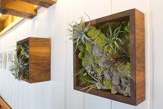 Belle mise en valeur de ce cadre végétal dans un support bois