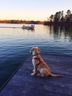 My dog would be in the boat with me!
