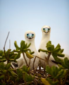 Journey to Midway Island by kk+, via Flickr