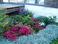 Plantas para Jardines Secos - Para Más Información Ingresa en: http://jardinespequenos.com/plantas-para-jardines-secos/