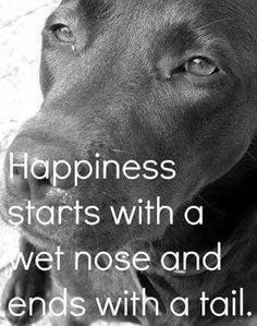 """Happiness starts with a wet nose ...and end with a wagging tail!"""