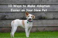 10 Ways to Make Adoption Easier on Your New Pet #adoptdontshop #dog #cat Rottweiler Facts, Rottweiler Puppies, Dog Dna Test, Dresser, Animal Rescue Site, Shelter Dogs, Four Legged, Dog Care, Frases