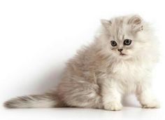 real stuffed looking kitten