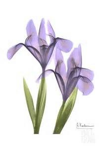 iris tattoos - - Yahoo Image Search Results
