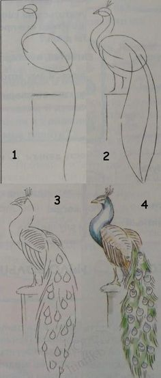 Drawing lessons for beginners - A PEACOCK / How to draw.