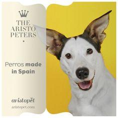 España es conocida por su cultura y gastronomía, sin embargo, muchos desconocen la existencia de varias razas autóctonas de perros. Hoy en ARISTOPET.COM/THE-ARISTOPETERS podréis descubrir los ocho tipos de razas españolas que existen.