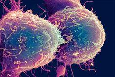 Kanker: Virus doodt kankercellen | Wetenschap in Beeld