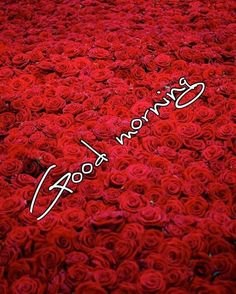 Good Morning Have a Nice Day Pics : Good Morning Photos, Good Morning Images, Good Morning Quotes, Good Morning Wishes Wallpaper for whatsa. Good Morning For Her, Cute Good Morning Quotes, Good Morning Roses, Good Morning Images Hd, Good Morning Picture, Good Morning Messages, Morning Pictures, Morning Pics, Happy Morning