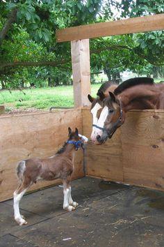 Deux chevaux adultes en réunion d'affaires avec un jeune entrepreneur.