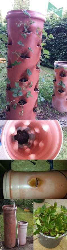Meine 2 Erdbeerpflanzen vom letzten Jahr haben Nachwuchs bekommen und das nicht zu knapp. Das alte Beet quilt über und die 36 Pflanzen brauchen ein neues Zuhause. Es ist Zeit für ein neues Vertikalbee