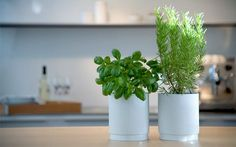 countertop herbs-indoor