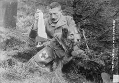 WW1 British Medic Dog carrying bandages.