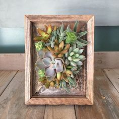 Pin for Later: The Prettiest Succulent Inspiration For the Indoor Garden of Your Dreams Whether your small space won't allow for a full garden or you're looking to add a touch of green to your home, succulents and air plants are the way to go. Succulent Frame, Vertical Succulent Gardens, Vertical Garden Design, Succulent Gardening, Succulent Arrangements, Succulent Terrarium, Planting Succulents, Indoor Gardening, Gardening Tips