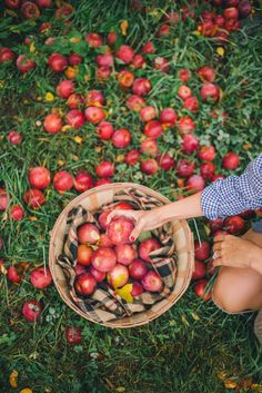 Apple Picking in Vermont