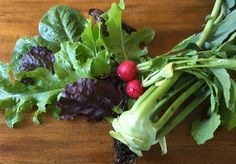 Harvest Vegetables at their Peak of Flavor & Nutrition – Garden with Diana