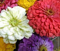 Zinnias to brighten your day!