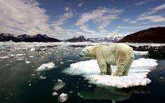 Eisbär Hintergrund