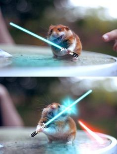 Images leaked from new Star Wars film. We don't need no stinking Yoda! Who doesn't like hamsters fighting with lifesavers! Funny Animal Jokes, Cute Funny Animals, Animal Memes, Funny Cute, Cute Dogs, Cute Babies, Hilarious, Baby Animals Pictures, Cute Animal Photos