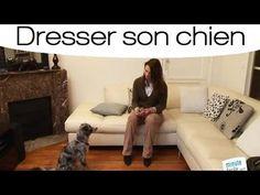 ▶ Dresser son chien pour qu'il ne mordille pas les meubles - YouTube Sons, Couch, Furniture, Youtube, Home Decor, Doggies, Dog Cat, Animaux, Settee