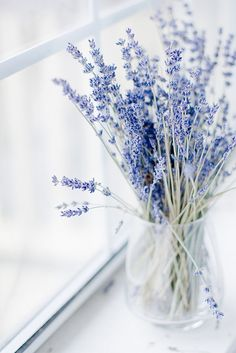 24 Good Morning Cards to Help you Start the Day Small vase Lavender stalks left to dry. Naturally beautiful and fragrant too. Lavender Blue, Lavender Fields, Lavander, Lavender Flowers, Lavender Colour, Lavender Cottage, Lavender Bouquet, White Flowers, Deco Floral