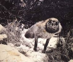 Rancho Las Voces: Fotografía / México: La exposición «Fauna» de Joan Fontcuberta