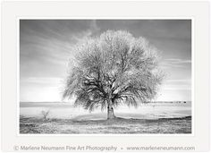 Marlene Neumann is a Master Photographer who intuitively captures the emotion in a landscape, beyond the camera.Her Black and White photographs are timeless