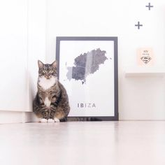 IBIZA • How cute is this cat from @littlesmall.nl? . Ibiza is available at Artinmaps.com or via linkinbio  . #artinmaps #kunstinkaart #ibiza #ibizalife #ibizamap #ibiza2017 #frame #frames #framedposter #poster #interiør #instahome #interieur #industrial #interiordecor #inredninginspiration #finahem #mitthjem #minimal #simplicity #scandichome #scandinavian #scandicliving #scandicinterior #whiteliving #travel #interiors #interiorwarrior #interiordesign #scandinavian