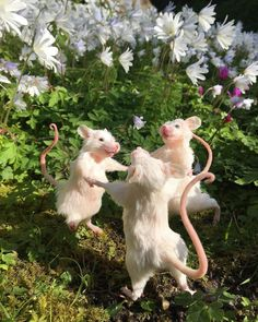 Cute Little Animals, Cute Funny Animals, Baby Farm Animals, Baby Cows, Cute Rats, Nature Aesthetic, Animal Memes, Aesthetic Pictures, Picture Wall