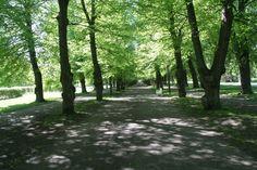 Boulognerskogen i Gävle. Trunks, Plants, Drift Wood, Tree Trunks, Plant, Planets
