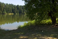 Waldviertel Dog Walking, Country Roads, River, Dogs, Photography, Outdoor, Woodland Forest, Outdoors, Photograph