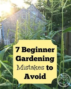 7 Beginner Gardening Mistakes to Avoid - The Cape Coop