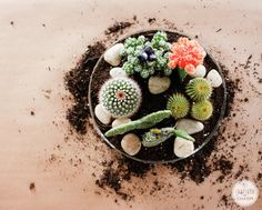 Tabletop Cactus Garden... I'm doing this.