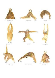 Watercolor sloths do yoga. {Animals Doing Yoga} Baby Sloth, Cute Sloth, Yoga Meditation, Image Yoga, Hata Yoga, Yoga Kunst, Funny Animals, Cute Animals, Image Deco