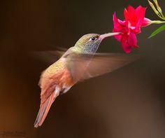 Fly  Animals photo by RonchiStefano http://rarme.com/?F9gZi